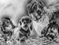 Recomposition de quatre photos en un seul portrait de chiens de chasse -