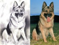 Portrait de chien + photo originale -